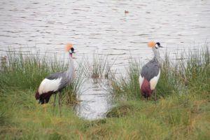 Parque Nacional de Arusha