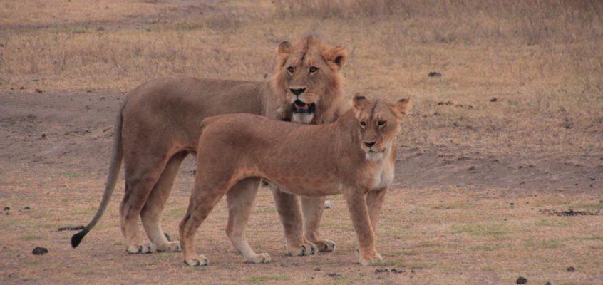 Parque Nacional de Ngorongoro y Garganta del Olduvai
